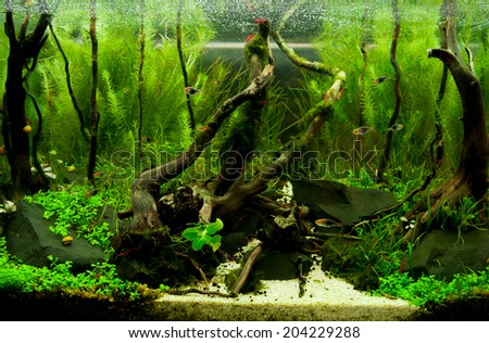 Tropical aquarium - stock photo