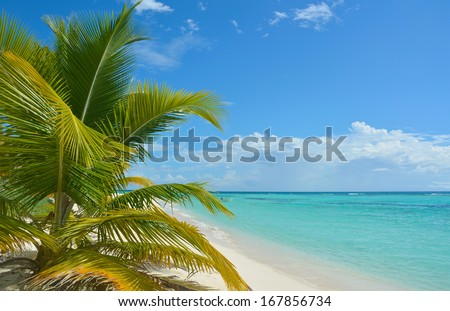 Tropical background - stock photo