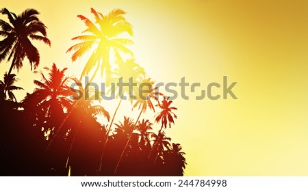 Tropical background with coconut palm trees - stock photo