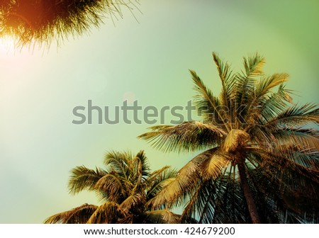 tropical background with palm trees with patches of sunlight (vintage, noise) - stock photo