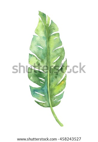 banana leaf isolated stock images royaltyfree images
