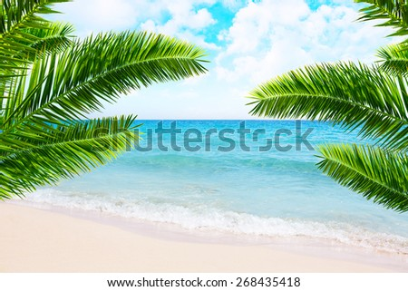 Tropical beach and palm tree.