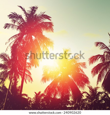 Tropical beach at sunset. Palm tree silhouettes - stock photo