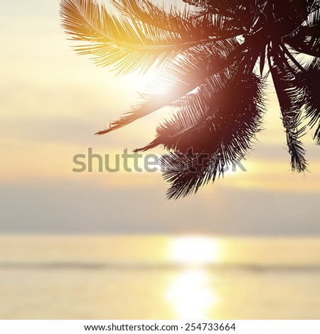 Tropical beach background at sunset (sunrise) with coconut palm tree - stock photo