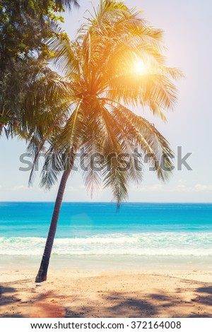 Tropical beach background with palm trees and sea - stock photo
