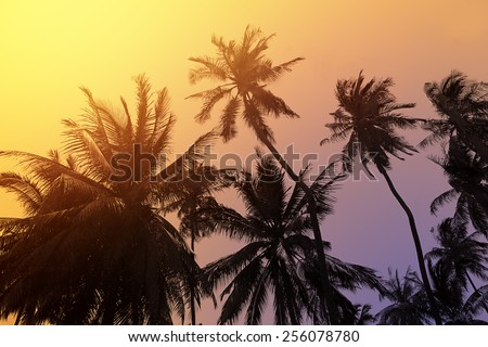 Tropical beach background with palm trees silhouette at sunset - stock photo