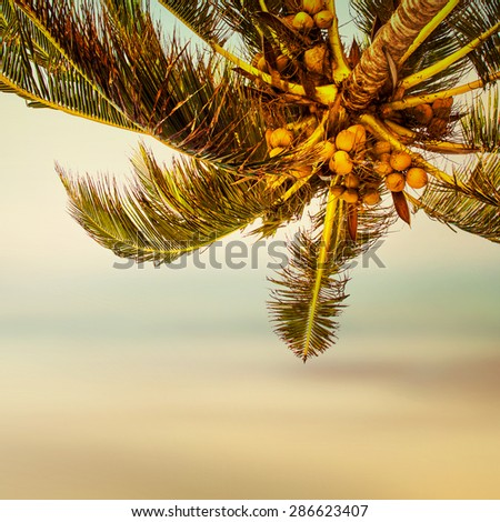 Tropical beach banner background. Coconut palm tree and blurry ocean.