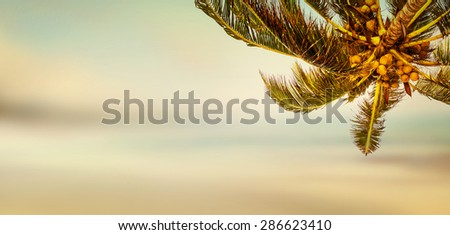 Tropical beach banner background. Coconut palm tree and blurry ocean. Panoramic view. - stock photo
