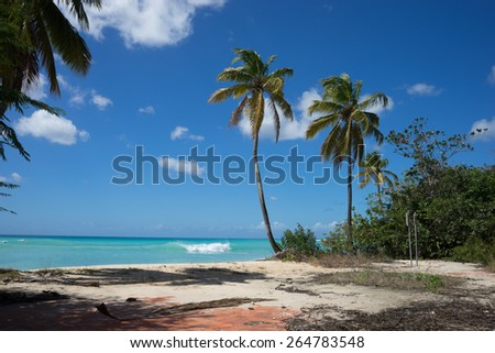 Tropical beach in Barbados