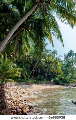 Tropical beach in southern India surrounded by coconut palm trees.