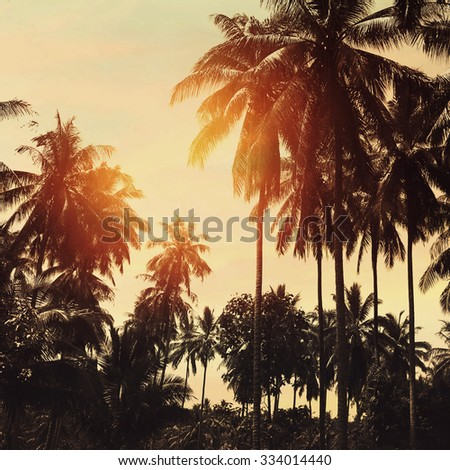 Tropical beach landscape with coconut palm trees at sunset. Paradise design banner background. Vintage effect.