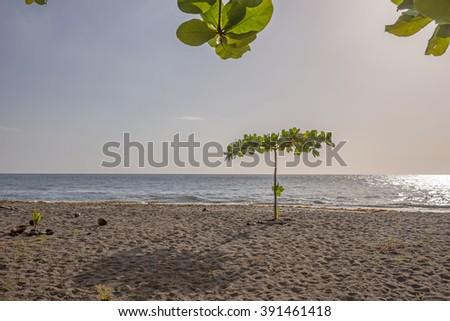 Tropical beach on Dominica, Caribbean Sea - stock photo