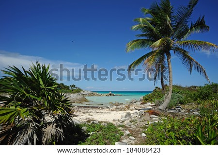 Tropical beach on the Caribbean sea