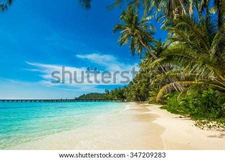 tropical beach.  sea and coconut palm.  Landscape of paradise tropical island beach
