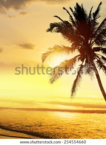 Tropical beach sunrise (sunset) with coconut palm tree silhouettes