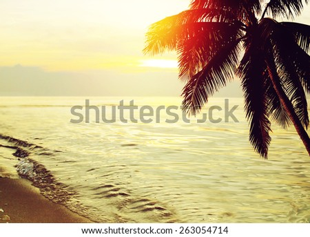 Tropical beach sunset background with palm tree silhouette.  - stock photo