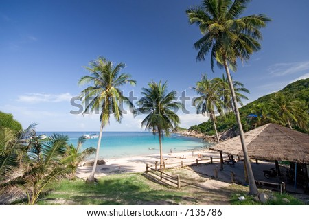 Tropical Beach View With Palm Trees