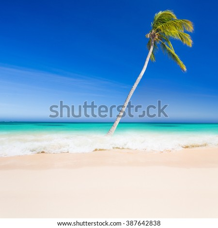 Tropical beach with a palm tree in Dominican Republic - stock photo