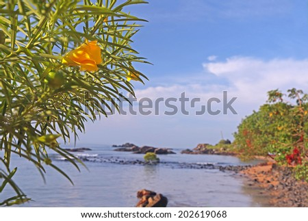 Tropical beach with a yellow oleander flower on the foreground. Focus on the flower - stock photo