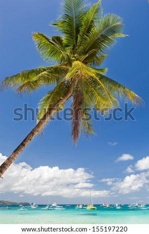 Tropical beach with beautiful palm and white sand, Philippines, Boracay Island - stock photo