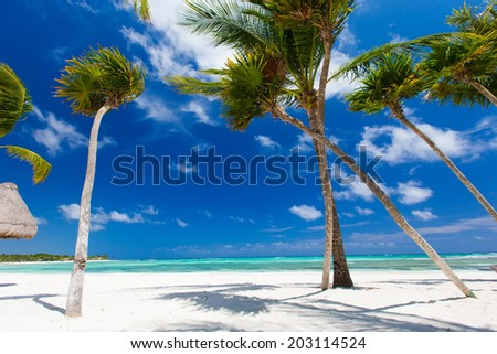 Tropical beach with beautiful palms and white sand - stock photo