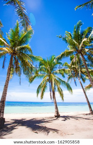 Tropical beach with beautiful palms and white sand, Philippines