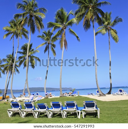 Tropical beach with blue long chairs and green grass on the foreground