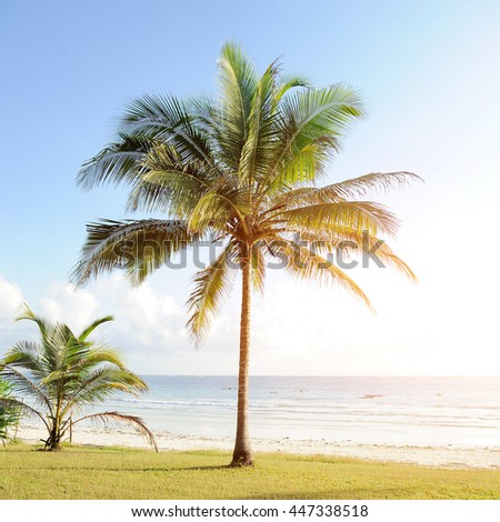 Tropical beach with coconut palm and turquoise waters - stock photo