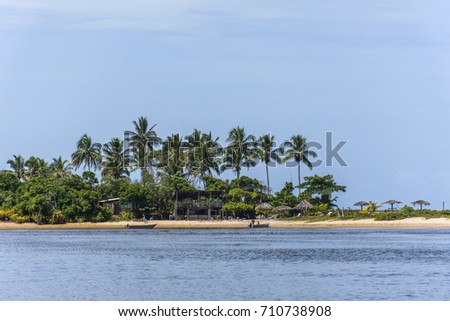Tropical beach with coconut palm trees in South Bahia, Brazil
