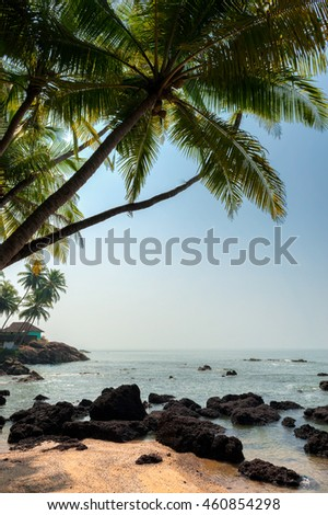 Tropical beach with Coconut Palm Trees, panoramic view with much copy space