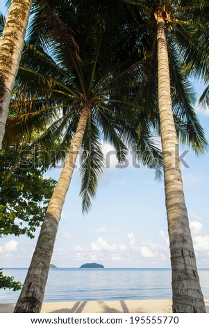 Tropical beach with coconut trees, Chang island, Thailand