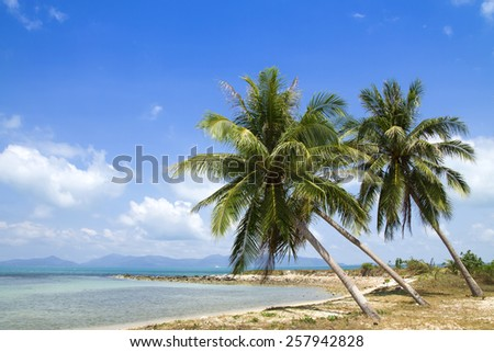 Tropical beach with coconut trees jutting out into the sea. Koh Samui, Thailand