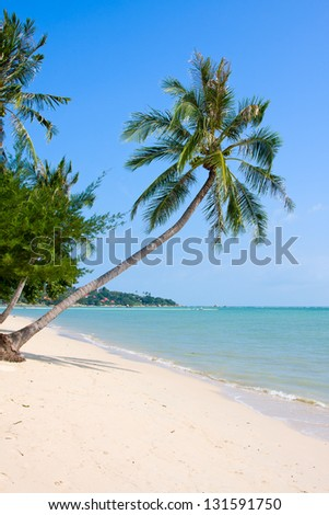 Tropical beach with exotic palm trees on the sand - stock photo