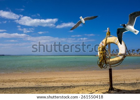 Tropical beach with lifebuoy and seagulls. Rescuer buoy on the sand beach for your concept of the summer vacation on sea resort. Summer landscape - coastline with two sea gulls. - stock photo