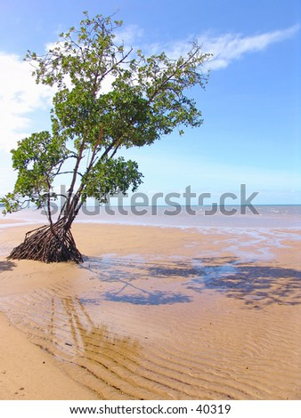 tropical beach with mangrove tree - stock photo