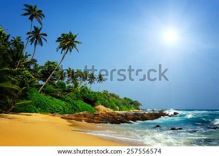 Tropical beach with palm in Sri Lanka - stock photo