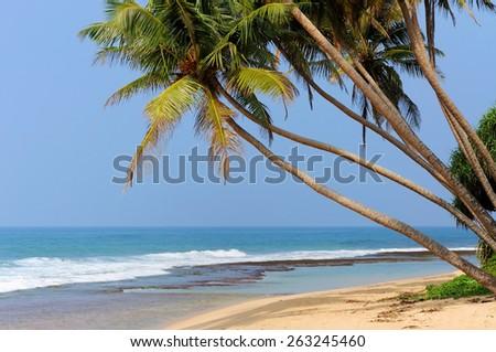 Tropical beach with palm in Sri Lanka - stock photo