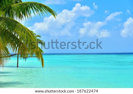 Tropical beach with palm leaves  - stock photo