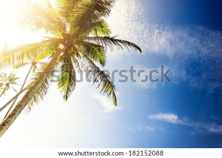 Tropical beach with palm trees. Beautifull sea sunset nature background - stock photo