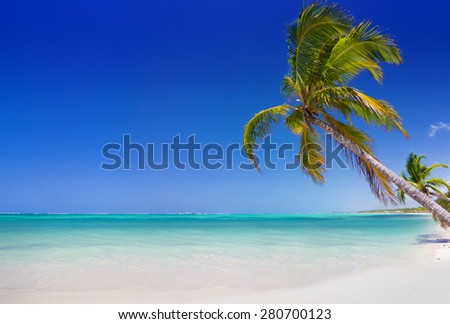 Tropical beach with palm trees in Punta Cana, Dominican Republic