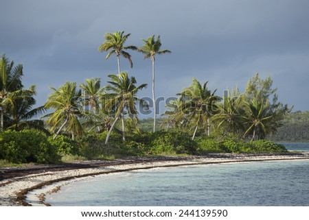 tropical beach with palm trees in the caribbean - stock photo