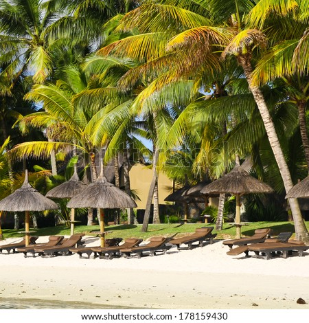 Tropical beach with palm trees, Mauritius - stock photo