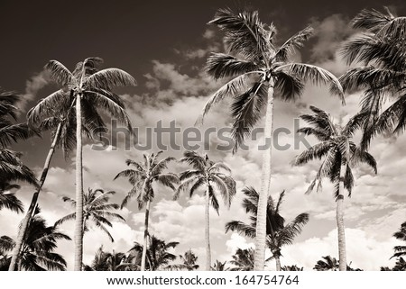 Tropical beach with palm trees. Monochrome. Black and white. Summer vacation concept - stock photo
