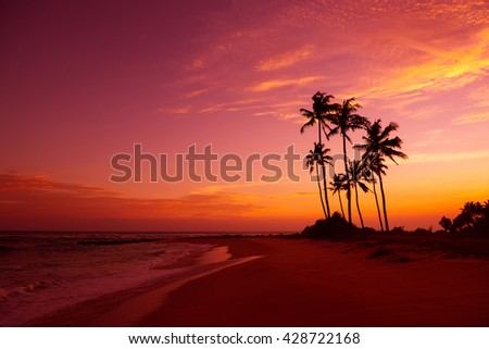 Tropical beach with palm trees silhouettes at sunset - stock photo
