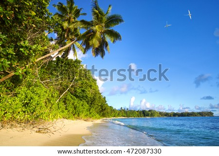 Tropical beach with palms and sand in Seychelles, Mahe Island