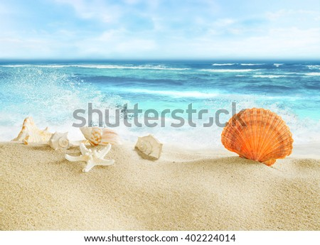 Tropical beach with shells. - stock photo