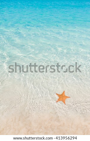 Tropical beach with starfish - stock photo