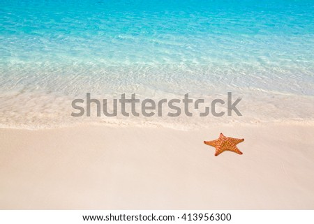 Tropical beach with starfish - stock photo
