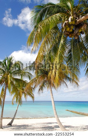 Tropical beach with white sand, coconut palms and blue ocean on Maria la Gorda, Cuba