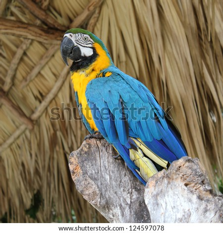 Tropical birds.  Macaw sitting on branch - stock photo